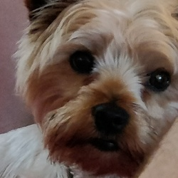 Reunited dog 28 Jul 2017 in Dublin 14. Update Reunited Thank you for your help Siobhan and Dundrum Garda Station