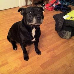 Lost dog on 28 Mar 2015 in Townspark in Navan. lost MISSING a few days now: NAVAN Chico is missing from Townspark in Navan. If you see him or may have taken him to safety please contact (085) 179 0848. Thanks
