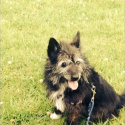 Lost dog on 28 Sep 2015 in Tallaght Dublin 24. Small terrier lost in Tallaght Dublin 24 between last night and this morning. Please contact Ciara on 0866666680 or Maggie on 0894534530