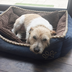 Lost dog on 29 Aug 2017 in Raheny. - reunited with owners- 