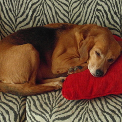 Lost dog on 30 Aug 2015 in SUTTON STRAND, D13. MISSING