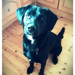 Lost dog on 30 Jan 0013 in Craughwell/Athenry, Co Galway. Large black Labrador cross, has a name-tag with phone number, and a navy bandana around his neck. Missing from the Coldwood area of Craughwell/Athenry, co Galway, since the afternoon of Wednesday 30th January. Thank you.