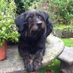Lost dog on 31 Jul 2015 in Enniscorthy . Dog is found. Thanks.