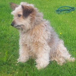 Lost dog on 31 Oct 2015 in Ballyneety/Ballysheedy area, Co. Limerick. Small dog, friendly, goes by the name Lucky went missing from near Ballyneety, Co. Li merick on 31st Oct.